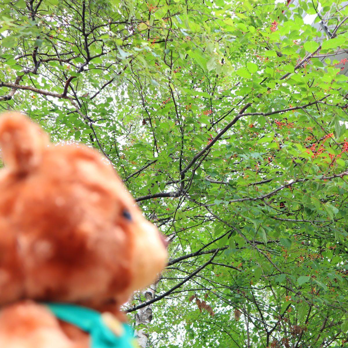 グッティーと木の実