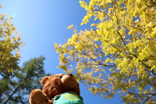 アカシアの木を見上げる
