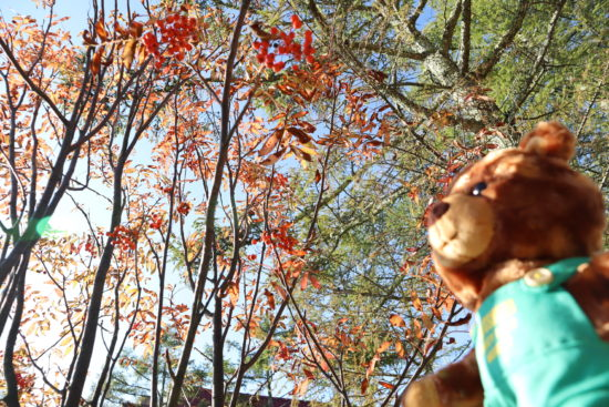木漏れ日とナナカマドの木