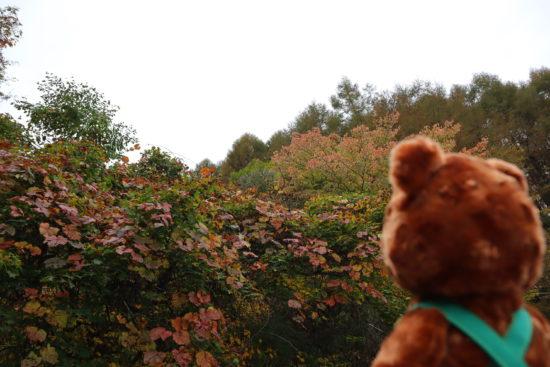 葛の葉と桜