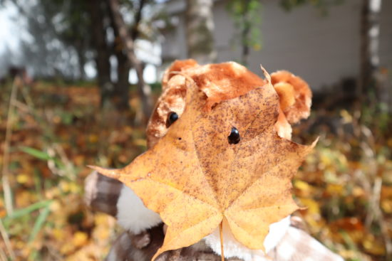 穴の開いた落葉
