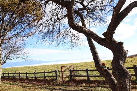 ④From蓼科第二牧場