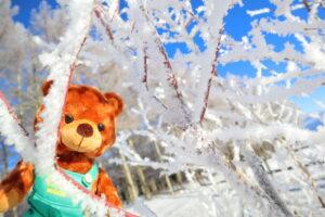 グッティー館長の旅~冬便り~