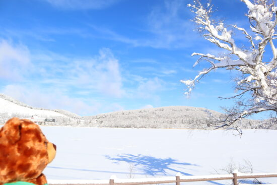 対岸の白樺湖