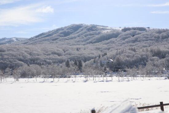 湖面中央の白樺の木